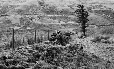 Rugged Scottish Misty Hillside.