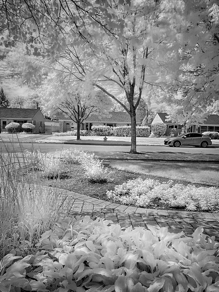 Front Yard with iPhone Infrared Photo
