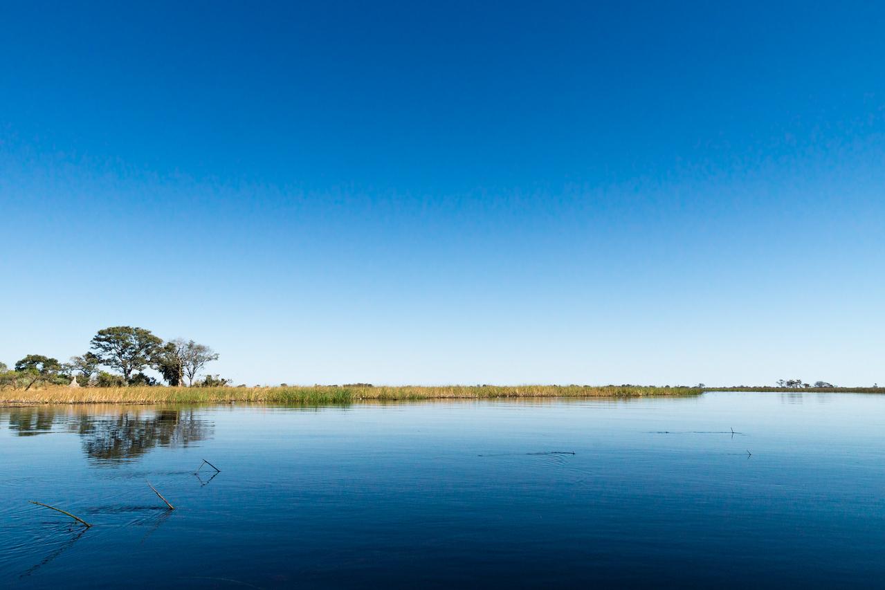 Okavango Morning Silence