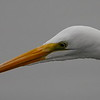 Later I walked around the lake and got much closer to the egret.  Even then, I needed to crop the photo to get this closeup.