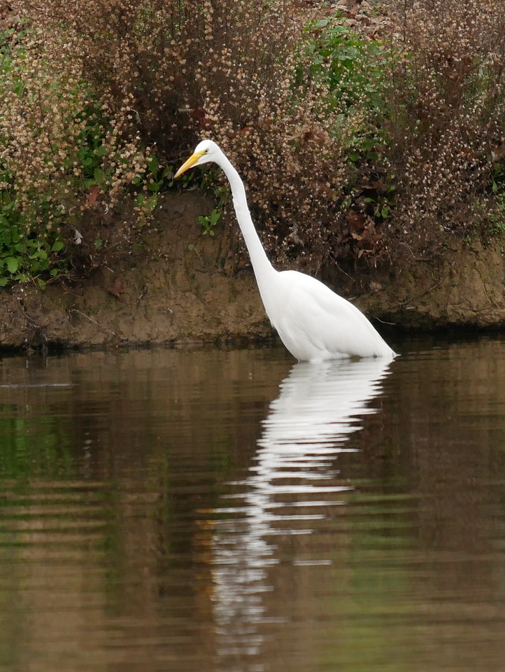 I needed the full 400mm zoom to photograph this great egret was across the lake.