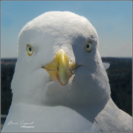 Seagull Waitting