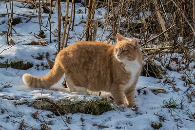 Cat - Kat