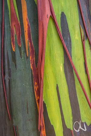rainbow bark