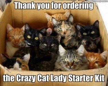 cat lady kit