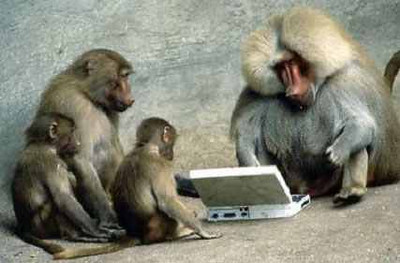 baboon laptop