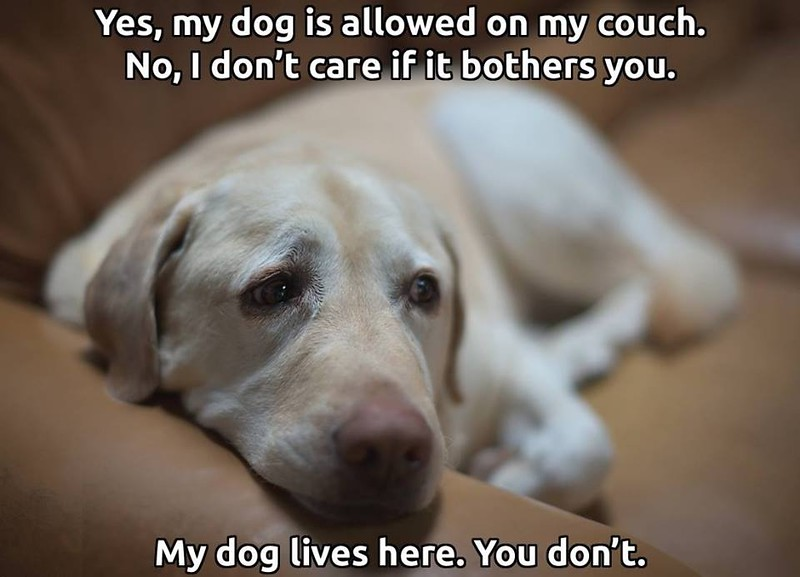 dog couch