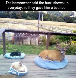 deer bed