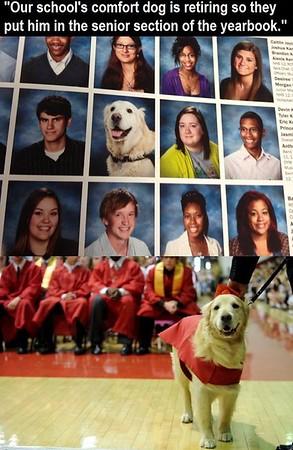 dog graduate