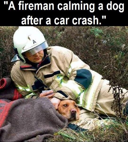 car crash dog