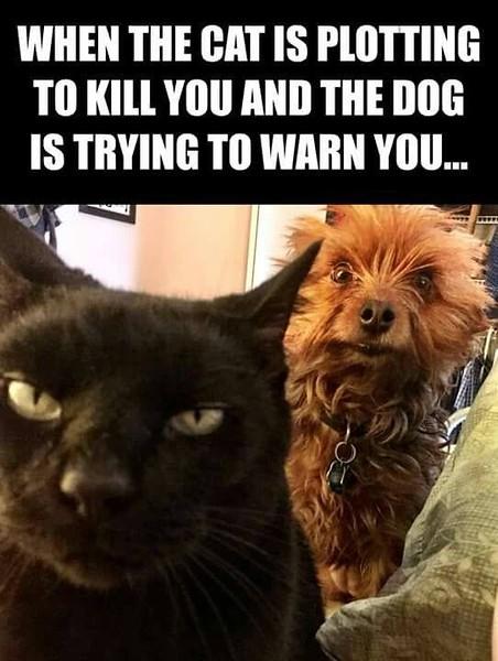 cat kill you