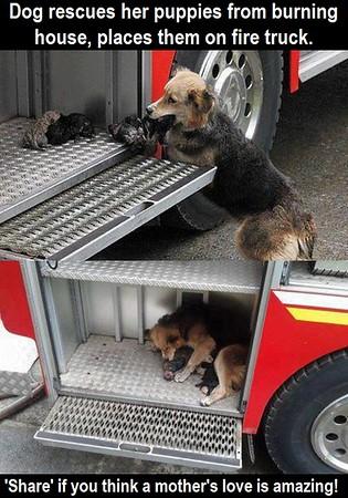dog firetruck