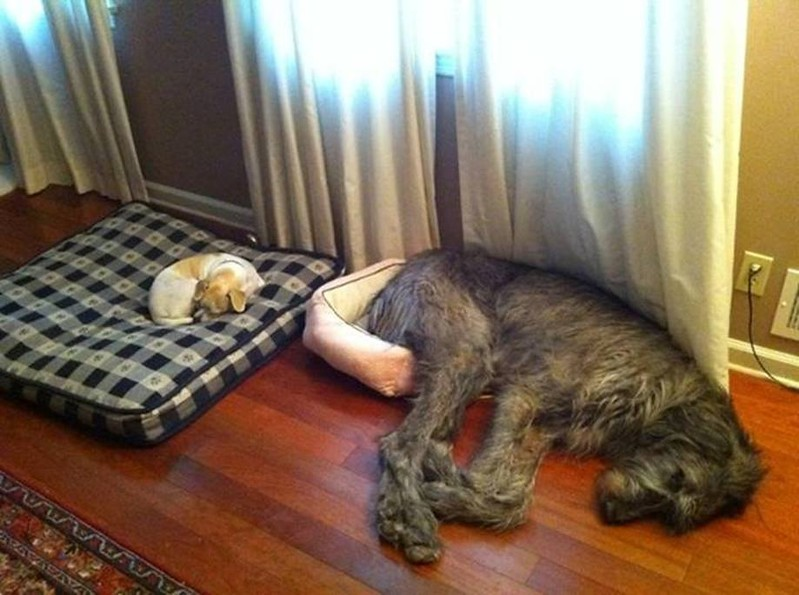 big little beds