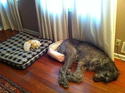 big little beds