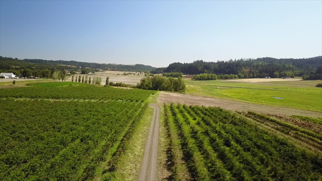 Farm sky footage, with music
