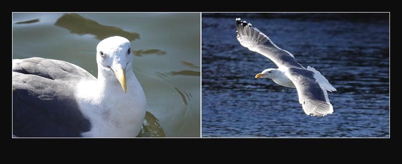 Birds at 600mm