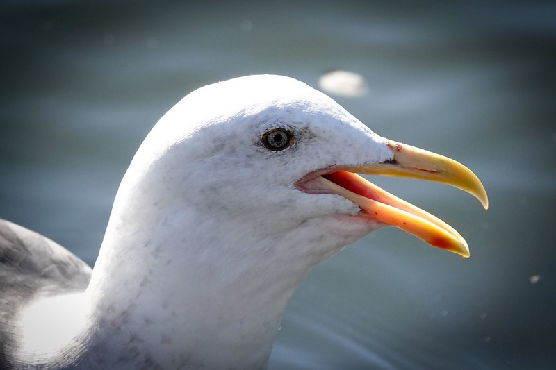 Super close up of a bird