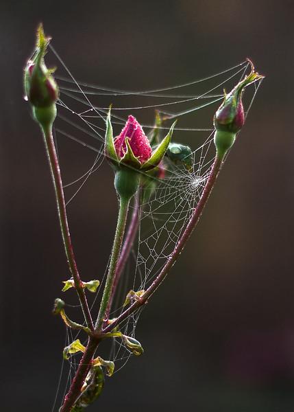 Natures Wonder