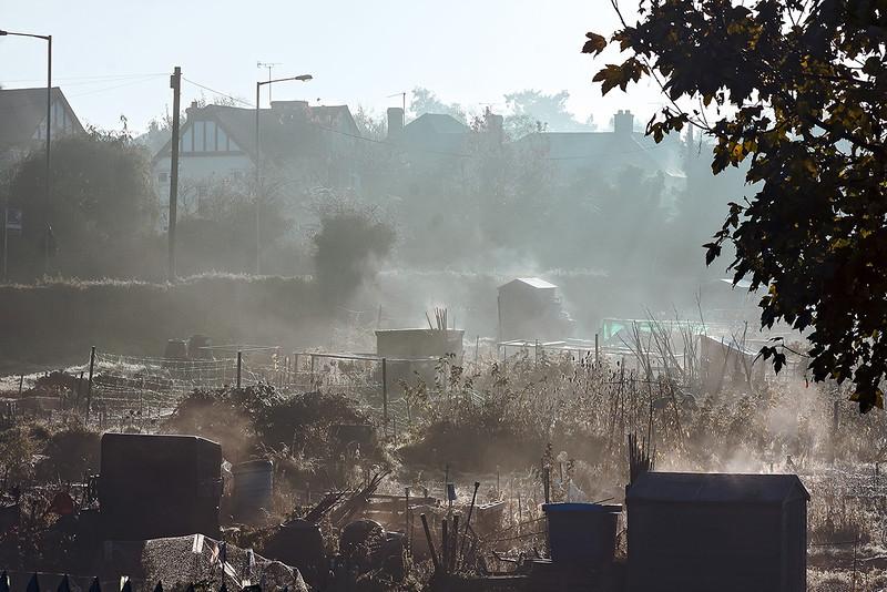 11th Nov 12:  Misty allotments at Twyford