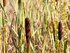 27th Sep 12:  Shadowed Bull Rush