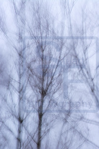 Wind in the Trees #4