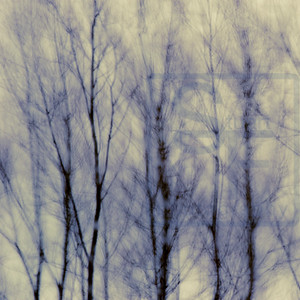 Wind in the Trees #7