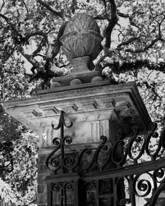 Scenes from historic Charleston
