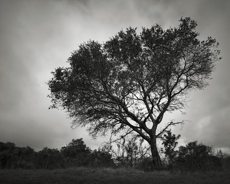 Tree along Mine Hill Road