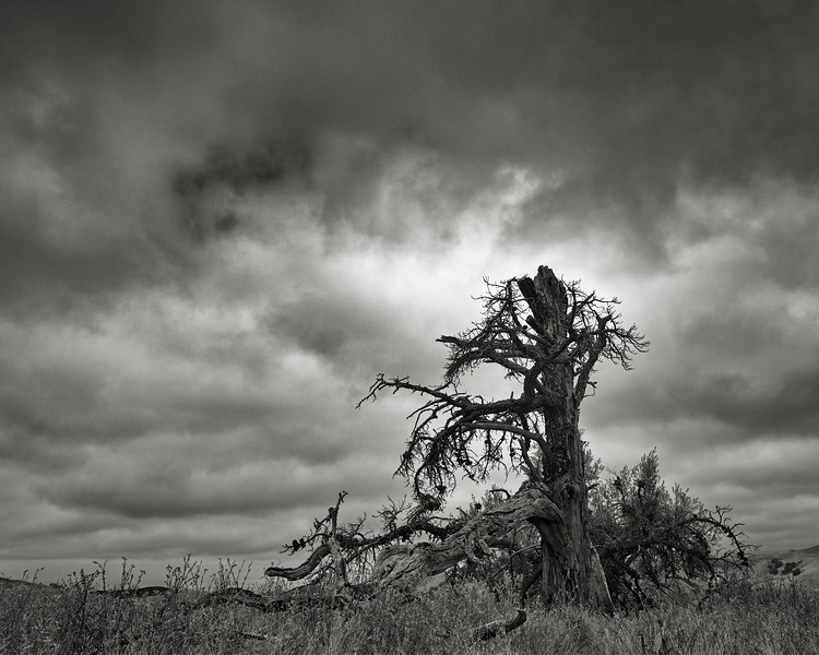 The Broken Tree