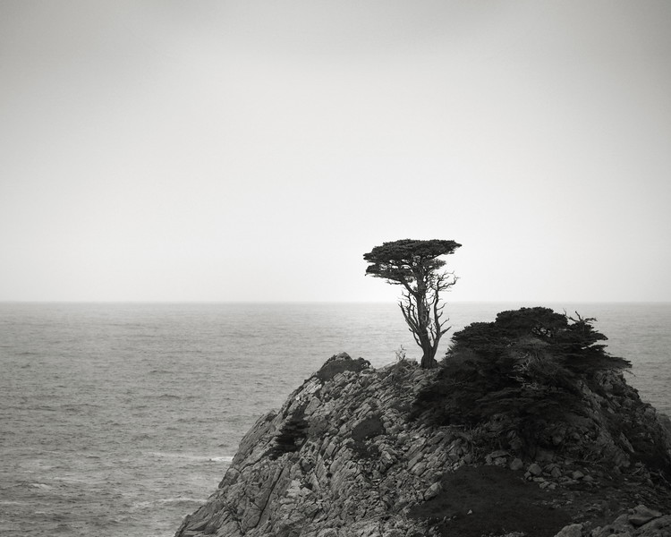 Lone Cypress at Point Lobos