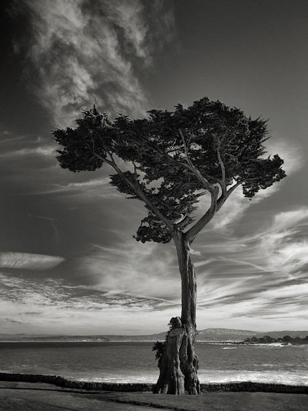 Cypress at Lovers Point