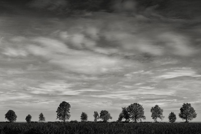 Eine Reihe von Bäumen