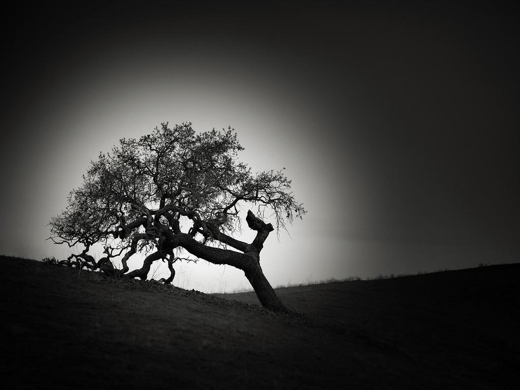 The Bracing Oak