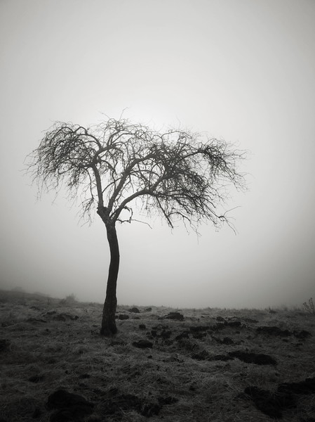 Boundary Trail Tree in the Fog