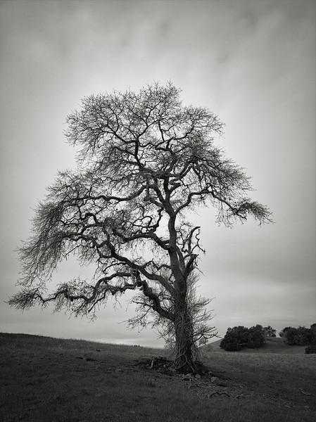 A Fine Tree along Harvey Bear Trail