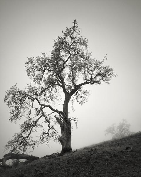 Two Trees at Joseph D. Grant