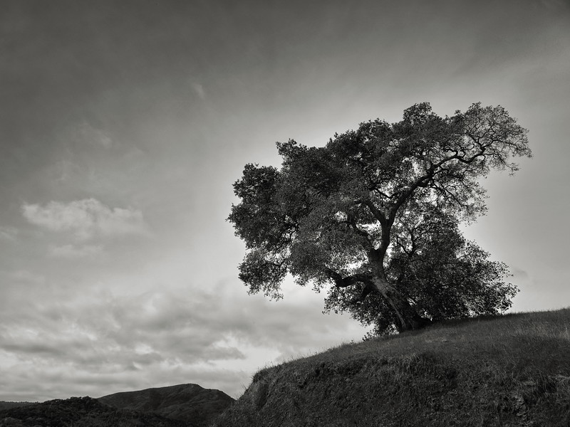 Tree overlooking Needlegrass Trail