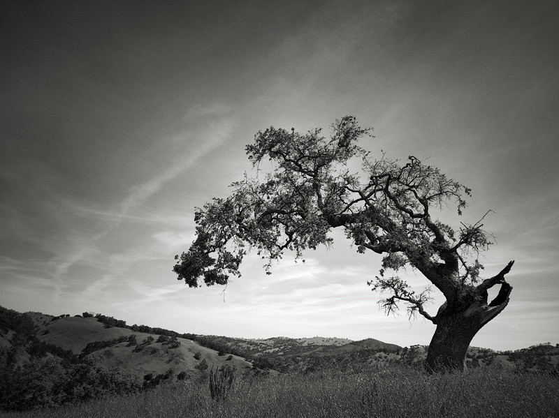 Arch Tree at Joseph D Grant