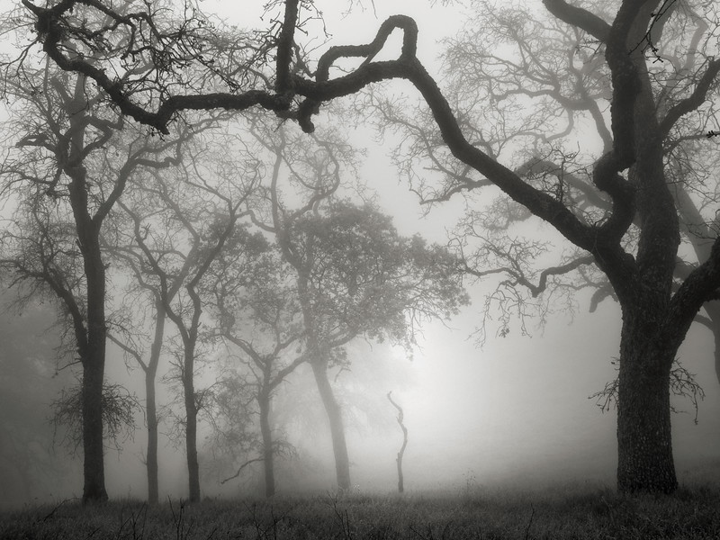 Hunting Hollow Fog Series 1