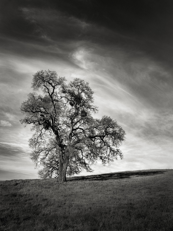 A Pleasant Tree