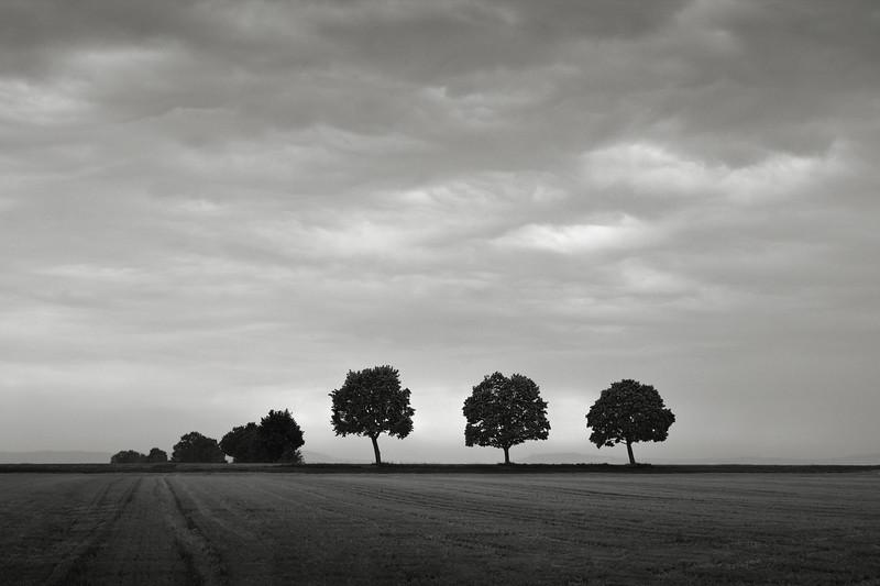Bäume am Feldrand