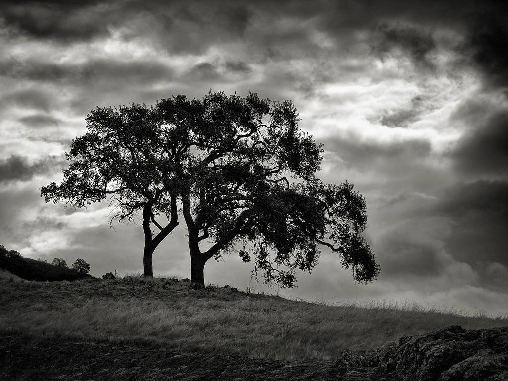 The Tree Couple