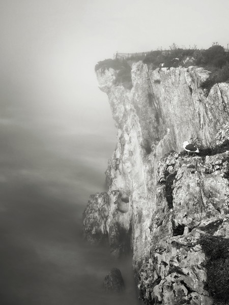 Seagulls on a Bluff in the Fog