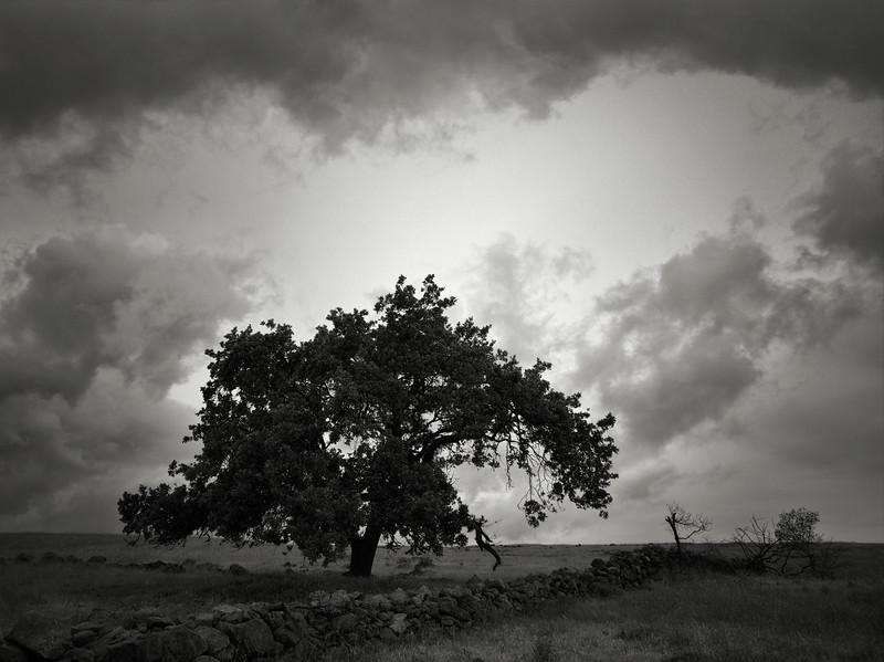 Tree and Stone Wall