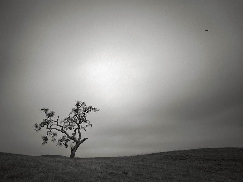 Bare Tree and Two Birds