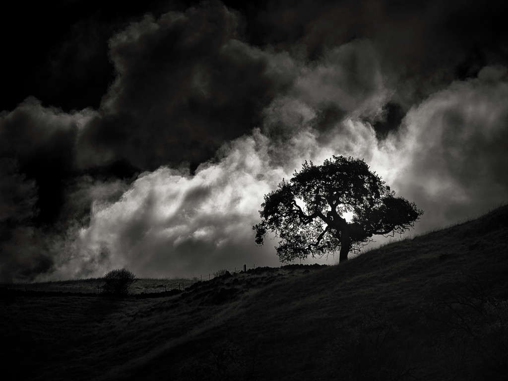 Clouds behind a Tree