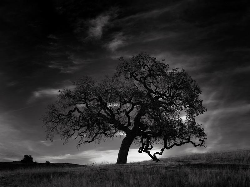 Cottle Trail Tree