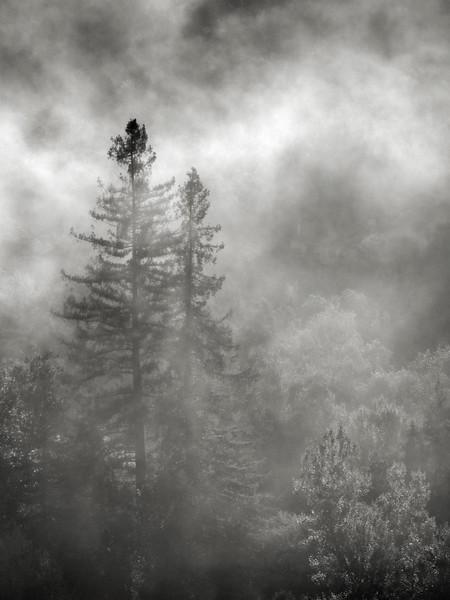 Morning Fog at Almaden Quicksilver