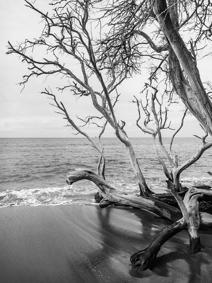 A Tree at the Pacific