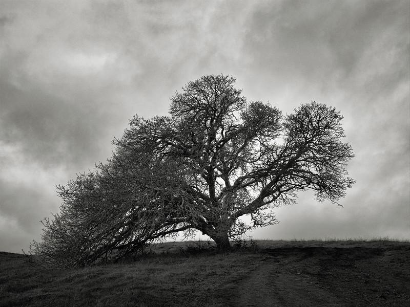 Guardian Tree